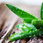 Medicinal benefits of Aloe Vera