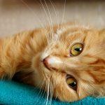 organic pet foodcat